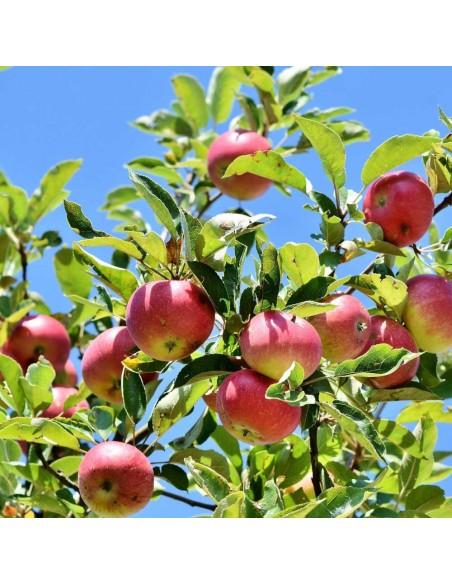 Engrais naturel pour arbre fruitier