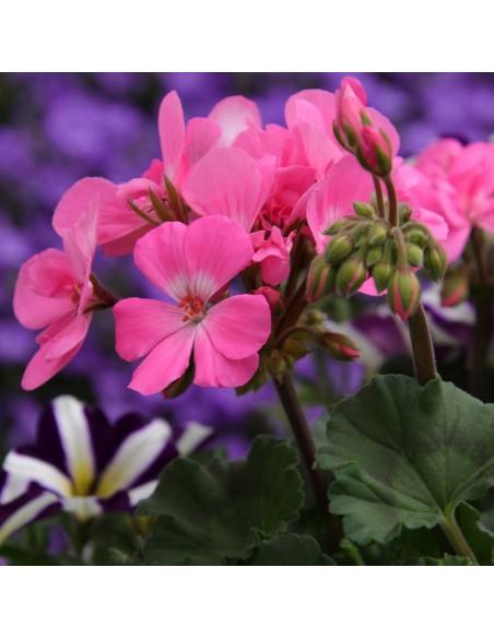 Engrais naturel pour fleurs et arbustes