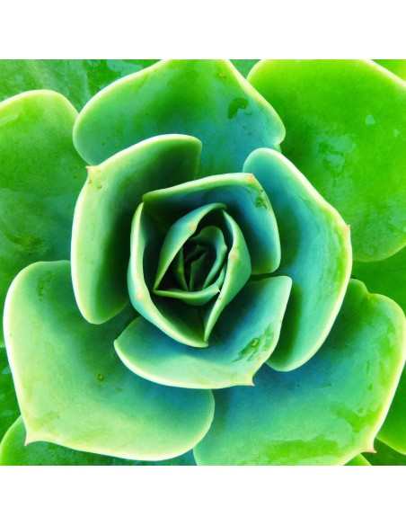 Engrais naturel pour cactus et plantes tropicales