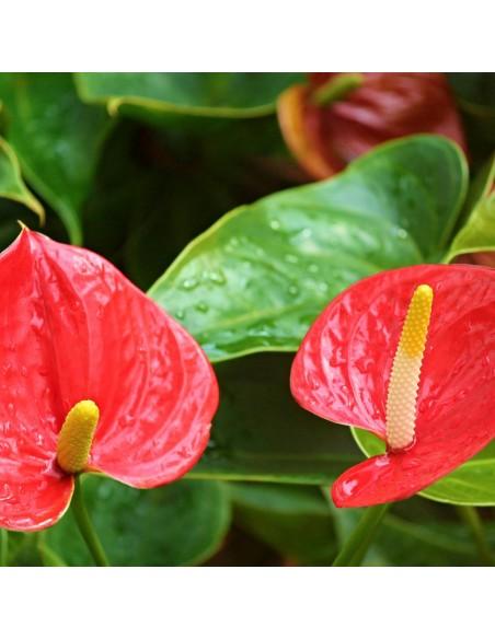 Engrais naturel pour plantes vertes